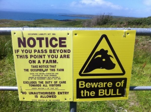 Bull sign