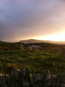 Evening light on Sherkin Island.