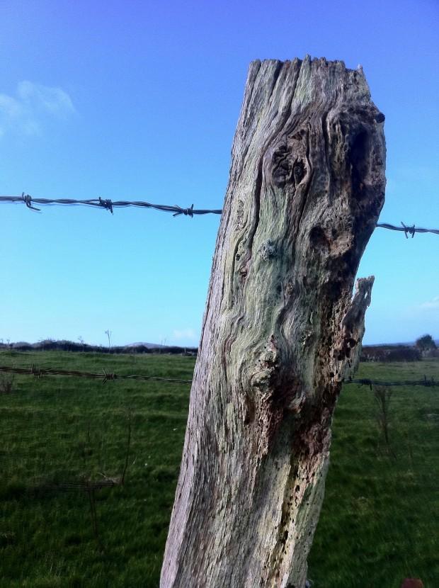 Spooky fence post, Sherkin Island. Be afraid....be very afraid.