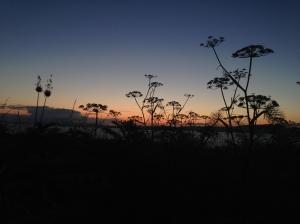 Sherkin Island Silhouette
