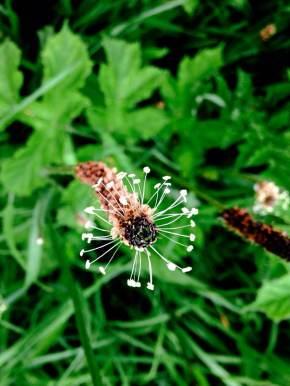 When weeds