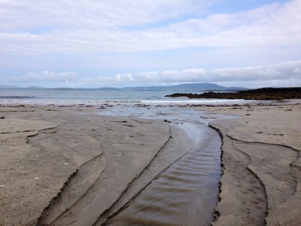 Wildsherkin where land meets water